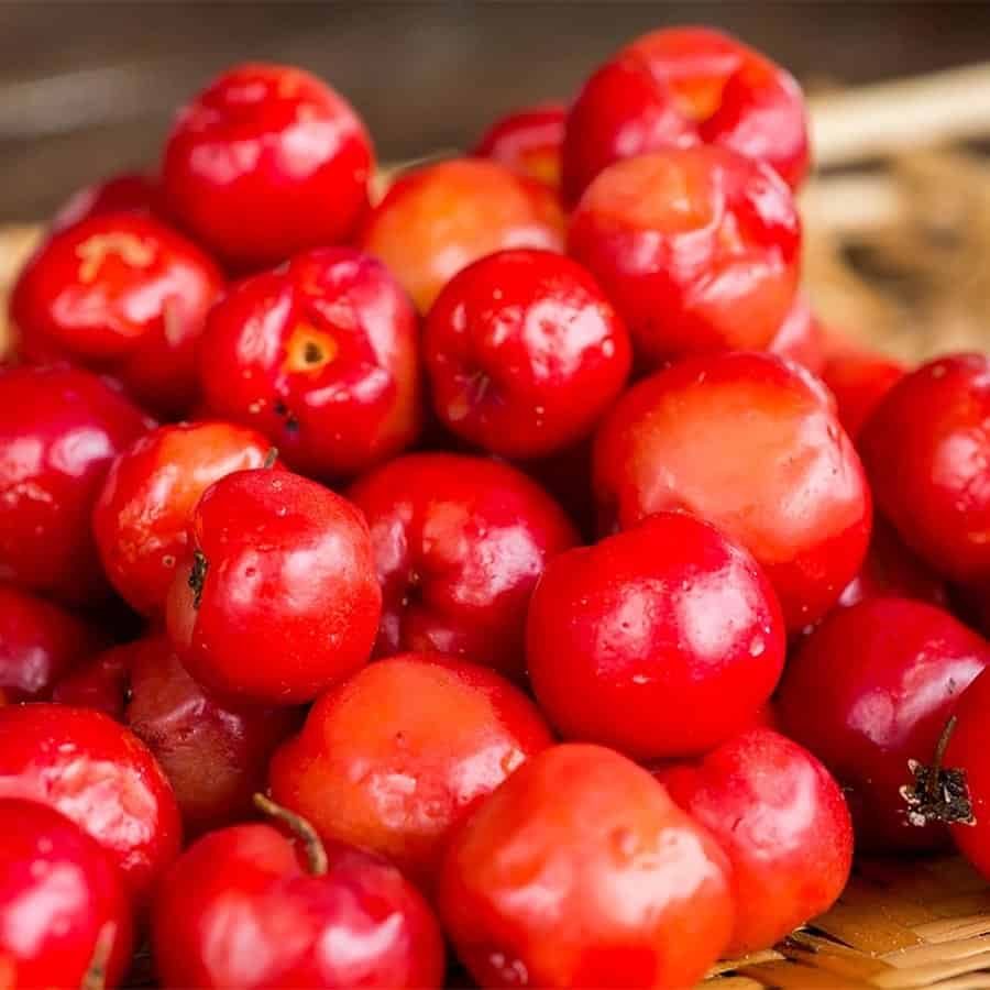 acerola fruits