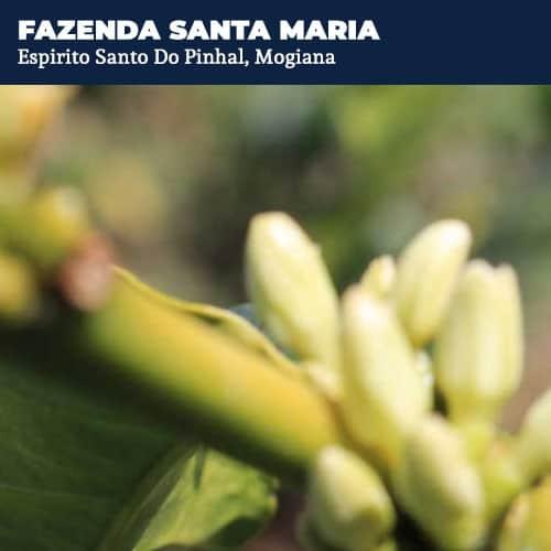 Fazenda Santa Maria.ESP.Mogiana
