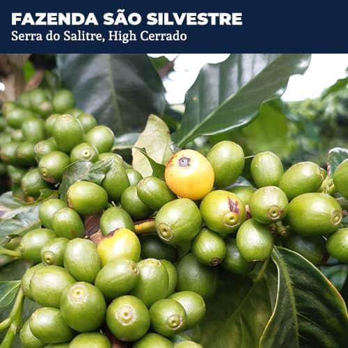 Fazenda Sao Sylvestre